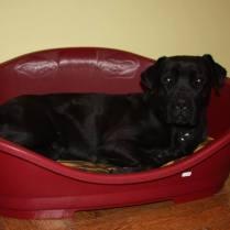 Musa, ahora Lola, descansando en su camita