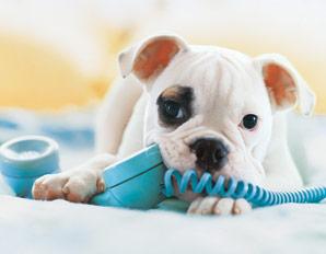 telefono-perro1