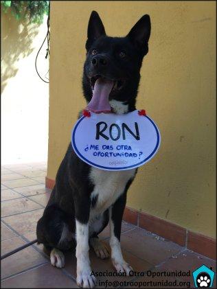 Ron busca un hogar