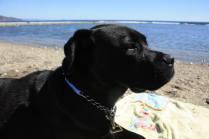 Lola (Musa) en las vacaciones de Semana Santa 2015 en la playa