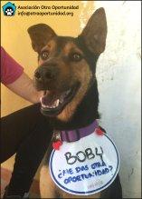 Boby en adopción