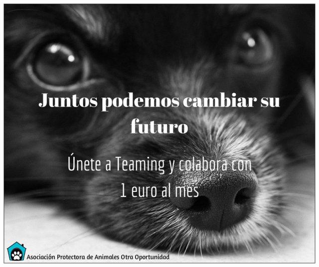 Juntos podemos cambiar su futuro (teaming)