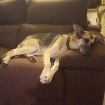 Rosa descansando en su nuevo hogar