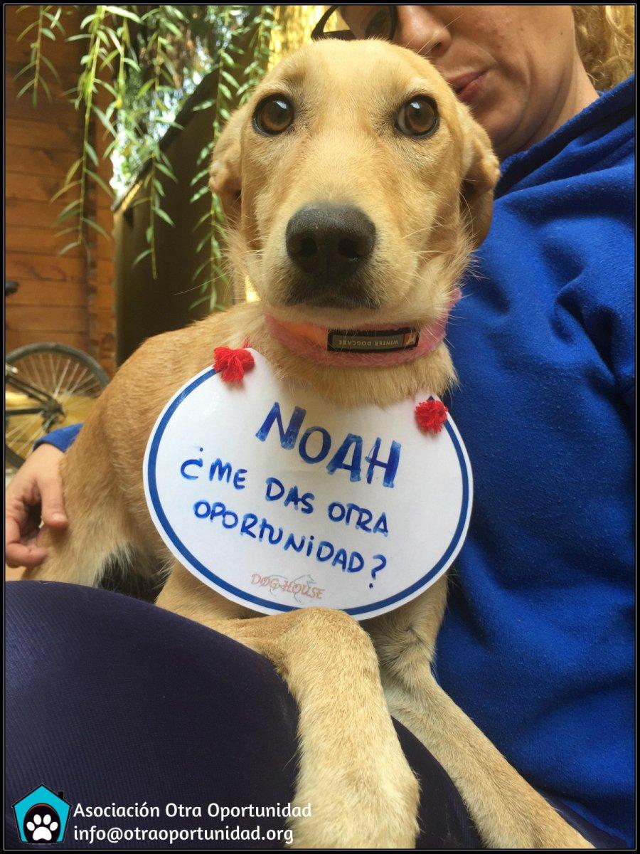 NOAH busca un hogar