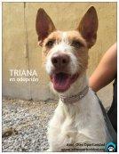 Perros en adopción Granada