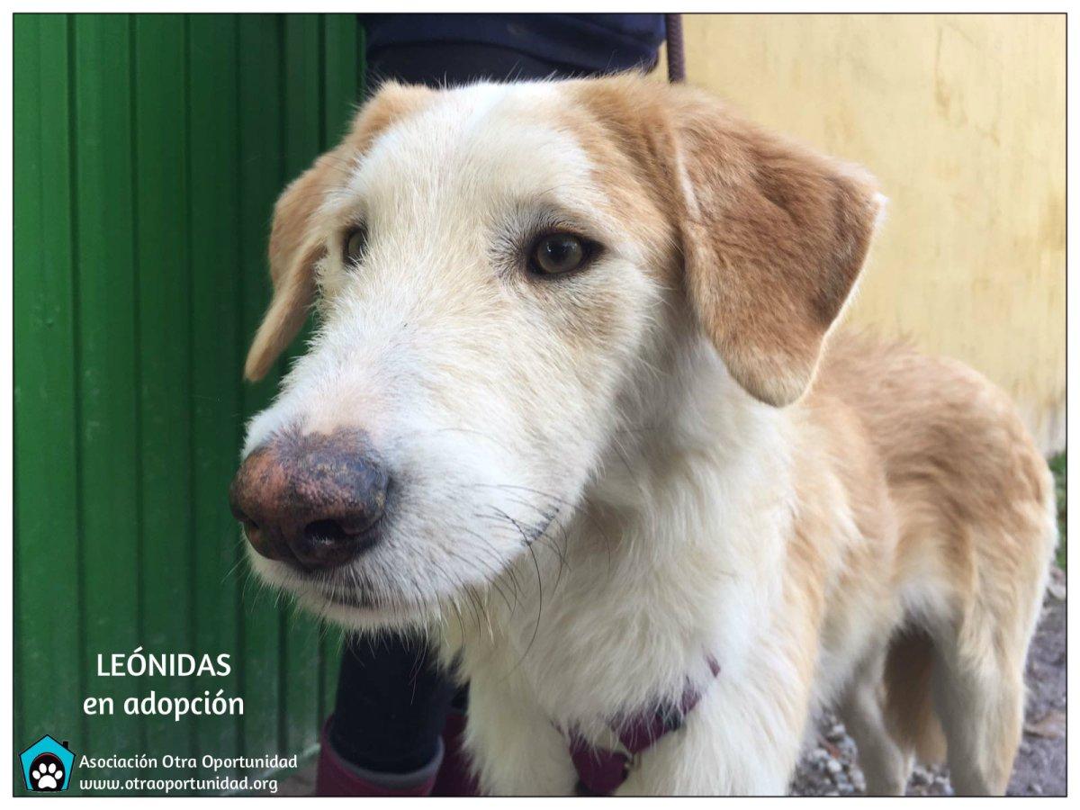 perro en adopción granada