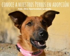 perros en adopción otra oportunidad