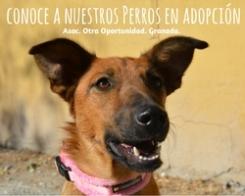 perros en adopción otra oportunidad