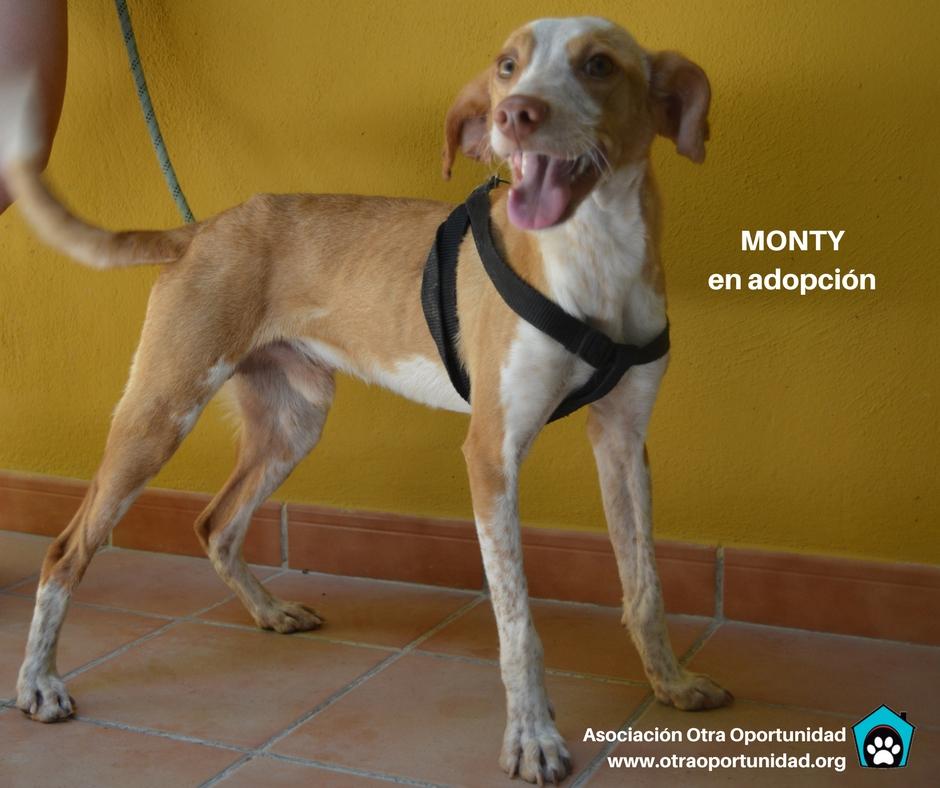 perros adopción granada
