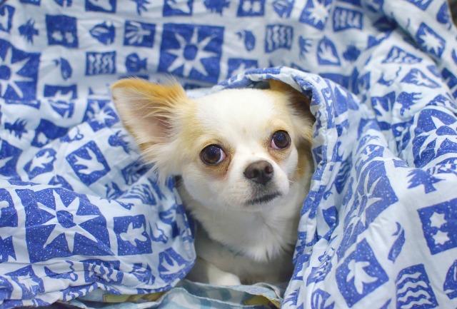 recogida de mantas perros sin hogar
