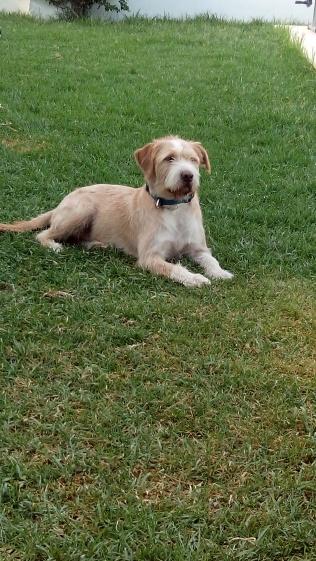 Semi, adoptado