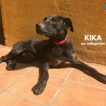 Kika en adopción