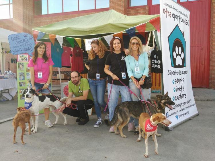Asociación Otra Oportunidad en la feria de adopción de Granada