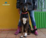 Scooby en adopción
